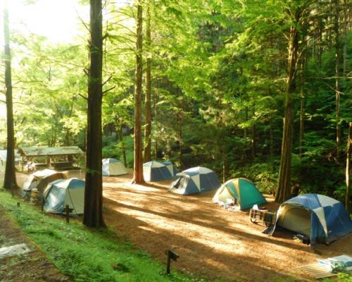 木漏れ日の中でキャンプ